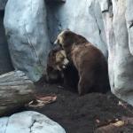 San Diego Zoo Foto