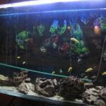 Großes Aquarium an der Treppe