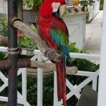 Cheery bird near the pool!