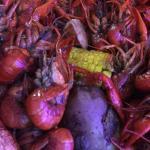 On Mardi Gras the crawfish were still pretty small.