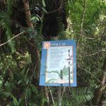 Foto de Skyrail Rainforest Cableway