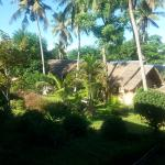 Bungalows and luscious gardens