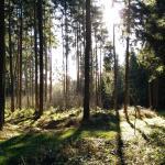 Wald direkt neben dem Thermengelände