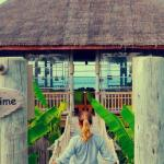 Six Senses Laamu Foto