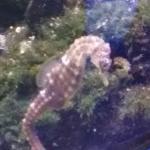 Photo de Genoa Aquarium