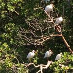 Foto di Everglades City Airboat Tours