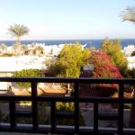 Poinciana Sharm Resort & Apartments Picture