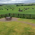 Photo de Bunratty Meadows Bed and Breakfast