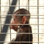 Bebé babuino