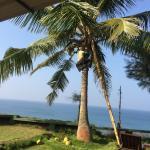 coconut harvesting during breakfast