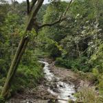 Rain Forest Lodge Foto