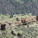 Fossil Ridge