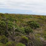 Photo de Cape of Good Hope