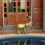 Elephant overlooking the pool