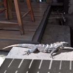 Our friend, near the pool / restaurant