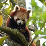 Auckland Zoo Foto