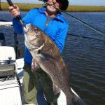 26 lb black drum on fly fishing