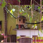 بوزادا شيز نيس صورة فوتوغرافية