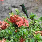 Photo de Fond Doux Plantation & Resort