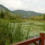 view from wooden bridge