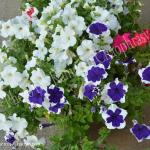 Marriott Park Motel의 사진