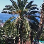 Vistas y palmerales del Parque Taoro