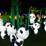 Pandas at the Magical Lantern Festival