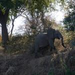 Foto de Gwabi River Lodge