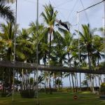 Trapeze Lessons (all included) from Experts