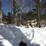 木立で雪洞