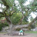 Muckross House and Gardens Foto