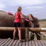 Elephant Brush