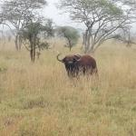 Diani Travel -Tours and Safaris LTD Foto
