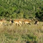 Kariega River Lodge Foto