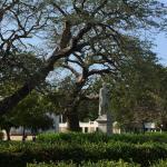 Quinta de San Pedro Alejandrino Foto
