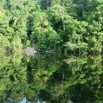 Amazon Jungle Palace Photo