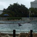 Miami Seaquarium Foto