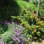 San Jorge Eco-Lodge & Botanical Reserve Foto