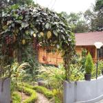 Spice Garden & Wooden house
