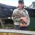 Bicheno ZOO - opiekunka z wombatem