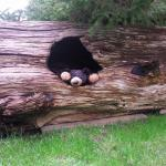 room 303 had a cute log outside with a hibernating bear :)