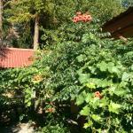Photo of Residencial El Rincon