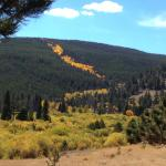 In some places in RMNP the hillsides can look like a river of gold