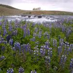Riding Tours South Iceland - Day Tours
