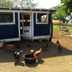 The Hen House; eggs are in the house every day to be picked up by guests.