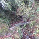 Hollyford Track Foto