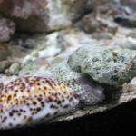 Eden Aquarium