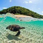 Tartaruga marinha (173367760)