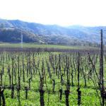 Vineyards, Chimisal Vineyards, San Luis Obispo, Ca