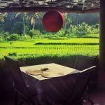 Puri Sawah Restaurant - overlooking the rice fields